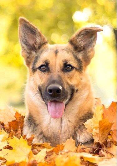 Блохи и клещи у собак — какие защитные препараты использовать?