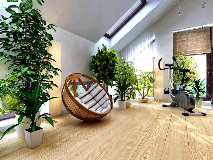 Какие растения выбрать для гостиной